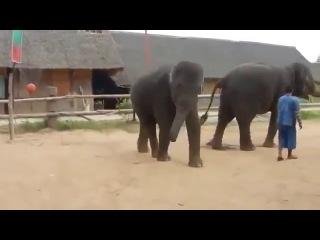 Приколы с животными!В Корее даже слоны танцуют под песню  Gangnam style!Смешное видео2014