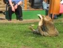 потрахульки козий парк Ижевск