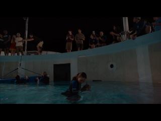 История Дельфина 2 / Dolphin Tale 2 (2014) Дублированный Трейлер №2