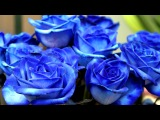 «АННА!!!!» под музыку Азиза Ибрагимова Любовь настала - Любовь настала. Picrolla