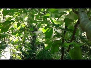 Стихи читаются сквозь блики солнца на листе