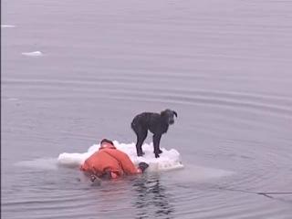 Чудесное спасение собаки на льдине