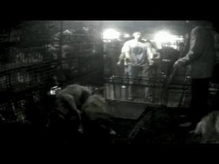 Çinlilerin hayvanlara olan işkenceleri
