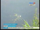 Загрязнения воды в реке Ижора