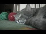 Когда я кашляю — мой кот крякает