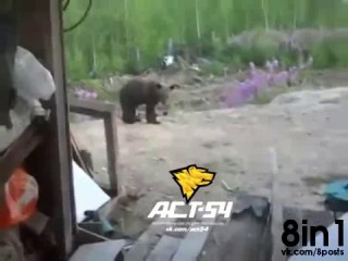 ������ ������ � �����������, � ����� �������� ��������� / Dog plays with a bear,...