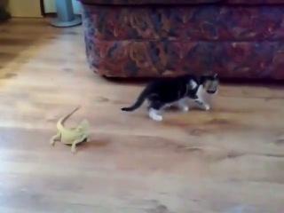 Korkudan kendini kaybeden kedi.
