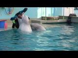 дельфинарий г.Кисловодск 03.11.14  киты