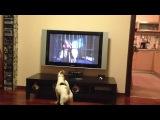 Смайлик смотрит фильм Маска
