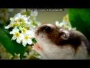 «Со стены Джунгарики ™» под музыку бурундуки песня-стап пипл - Стап Пипл. Picrolla