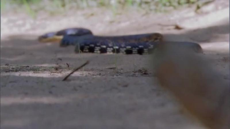 BBC Жизнь. Фильм 2. Рептилии и земноводные Life. Reptiles And Amphibians (2009)