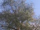 Қарға Алла деп сойлейды Бұл шындык Тараз қаласы Бектөбе ауылы Бектөбе көшесінде болған оқиға