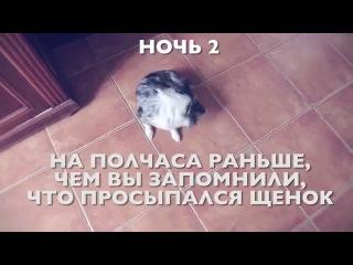 Режим щенка и про КОНКУРС (Чихуахуа советы от Софи про режим щенка)