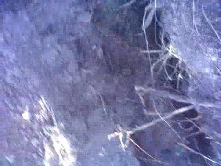 2 дозорных прочесывают лес