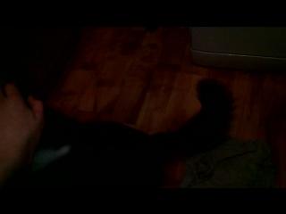 научил кота ходить на задних лапах
