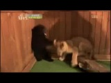 эта песдетс)))))))))))))))это видео самое ржачное что я видел)))смотри полюбому)))))))))))