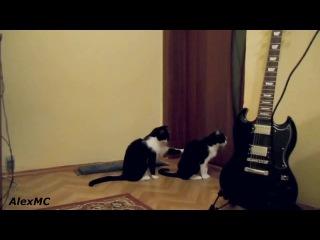 кот просит прощение