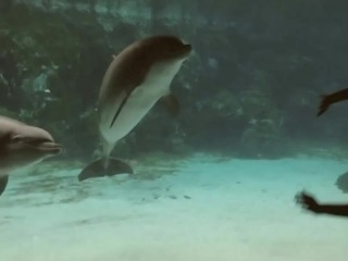 How to make a dolphine laugh