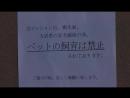 Мой любимец / Kimi wa Petto - фрагмент 6
