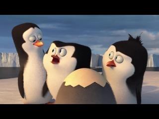 Пингвины Мадагаскара  | Дублированный трейлер (КиноPUZZLE) | Премьера в мире 27.03.2015