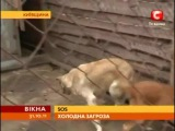 Приют 'Сириус' в новостях СТБ