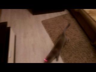 глупые кошки Егора