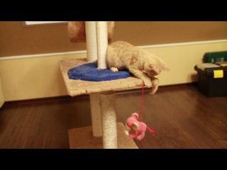 Эпическая схватка рыжего кота с розовым слоном