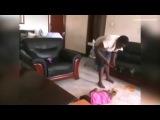 Установить дома скрытые камеры Эрика Камази из Уганды заставили странные синяки, появившиеся на теле его маленькой дочери. Мужчина решил понаблюдать, что происходит с ребенком, когда родителей нет дома, а дочь остается вместе с няней.Скрытая камера без купюр запечатлела процесс типичного времяпрепровождения няни и ее подопечной. Сначала женщина пытается накормить двухлетнюю девочку кашей. Та ест неохотно и получает многочисленные оплеухи и затрещины. После такой кормежки ребенка начинает тошнить прямо на ковер. Это явно мешает нянечке спокойно смотреть телевизор. Она швыряет дитя на пол, бьет подвернувшимися под руку вещами, а потом и вовсе встает на спину ребенка ногами и начинает топтать.Когда видео попало в руки отца ребенка, он пришел в ярость. Эрик Камази сильно избил няню-садистку. Женщина оказалась в инвалидном кресле, а родителям пришлось отвечать за свои действия перед полицией.Однако сторона защиты Камази использовала запись скрытой камеры и в итоге сама няня оказалась фигуранткой дела о покушении на убийство ребенка.