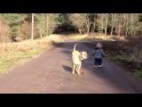 Малыш выгуливает собаку и тут… лужа! И пусть весь мир подождет!