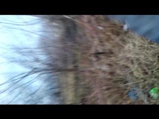 Новоселица - Черновцы : Часть 5