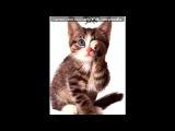 гулянки под музыку Група Елисаветград &amp Никола - Автор песни Роман Булгачёв. Я тебя люблю. Picrolla