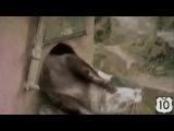 Топ 10 ПРИКОЛОВ: 50 минут!!! СМЕШНЫЕ КОШКИ, СОБАКИ, др ЖИВОТНЫЕ (2014)