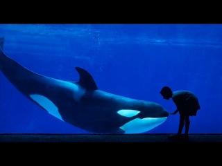 Anuar Kaskabaev - Вы видели как умирают киты (автор стихотворения Дима Птицев)
