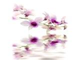 Чудесная орхидея (эротический саксофон)