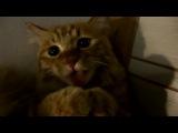 Кот и пылесос (6 sec)