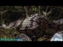 BBC Жизнь с холодной кровью 4 я серия Удивительные змеи