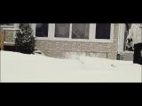 Кот и снег)