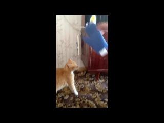Мстительный кот Cat's revenge, разозлили кота, прикол