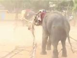 бешенный слон