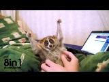 Прекрасная жизнь милого глазастого лори / Лори — самые милые животные в мире!