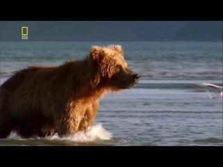 Планета хищников 4 Царь медведь