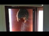 Осы свили гнездо на стеклянной двери