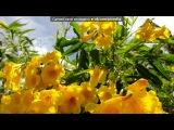 Остров ГАИТИ. Republica DOMINICANA!!! под музыку Bavaro Barcelo Palase Delux - Доминиканская песня. Picrolla
