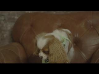 Как научить собаку танцевать вальс