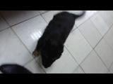 Дерзкое нападение собаки на человека ! шок 18+ едят заживо