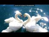 поздравления под музыку Кристина Орбакайте &ampamp Аврам Руссо - Я не отдам тебя никому Прощу любую твою вину Сквозь столько бед и потерь пройдя Какое счастье любить тебя Просто любить тебя. Picrolla