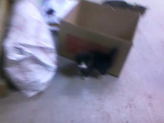 мелкая кошка охотится
