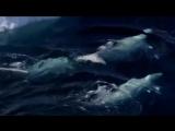 И. С. Бах Органная хоральная прелюдия фа минор - J.S. Bach  Prelude.mp4