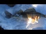 Рыба-игла из пасти судака на Нижнекамском водохранилище (Ижевка) 17.01.2015