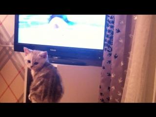 Котик Безе болеет за наших